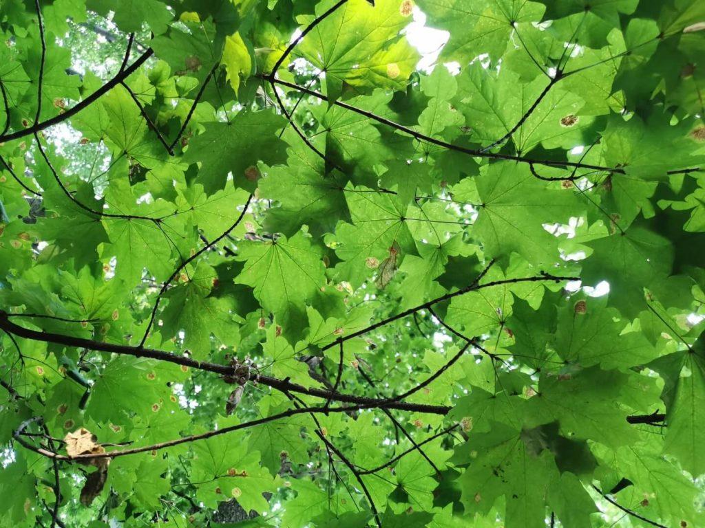 Отображение зеленого цвета камерой смартфона Huawei P30
