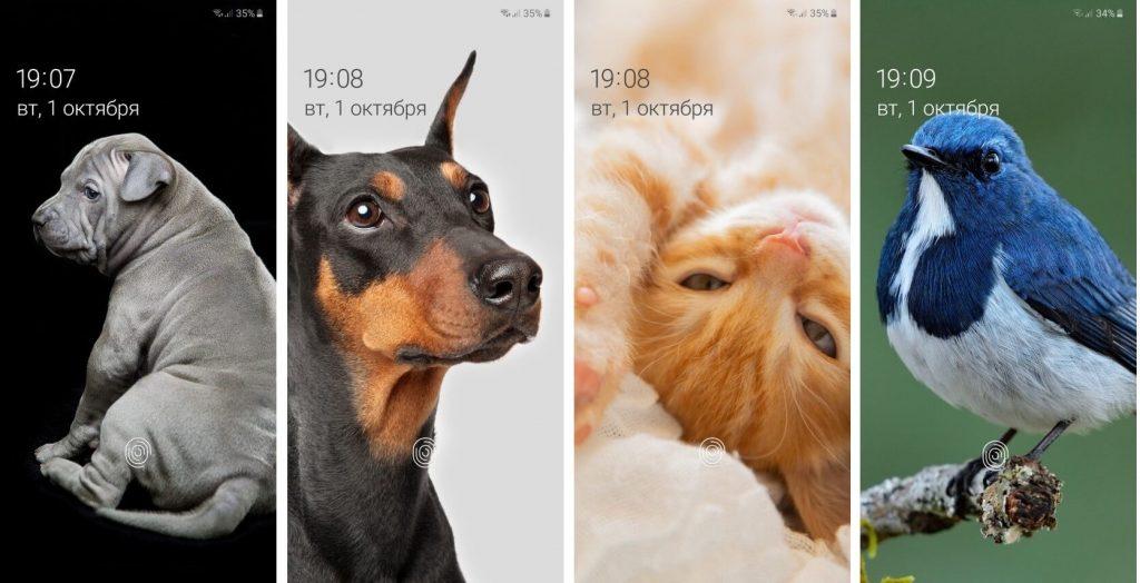 Динамические обои на экране Samsung Galaxy Note 10 или Galaxy S10