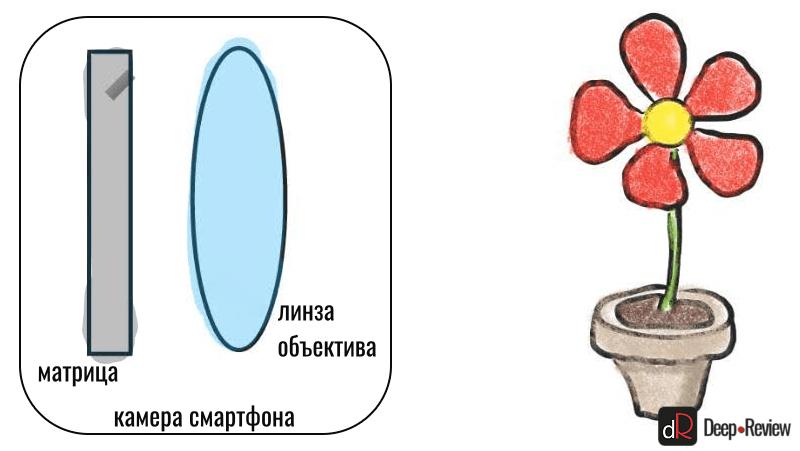 линза объектива смартфона и цветок
