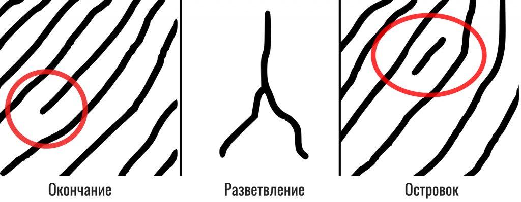 сканирование отпечатков пальцев (минуции)