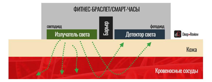 принцип работы оптического пульсометра на фитнес-браслете