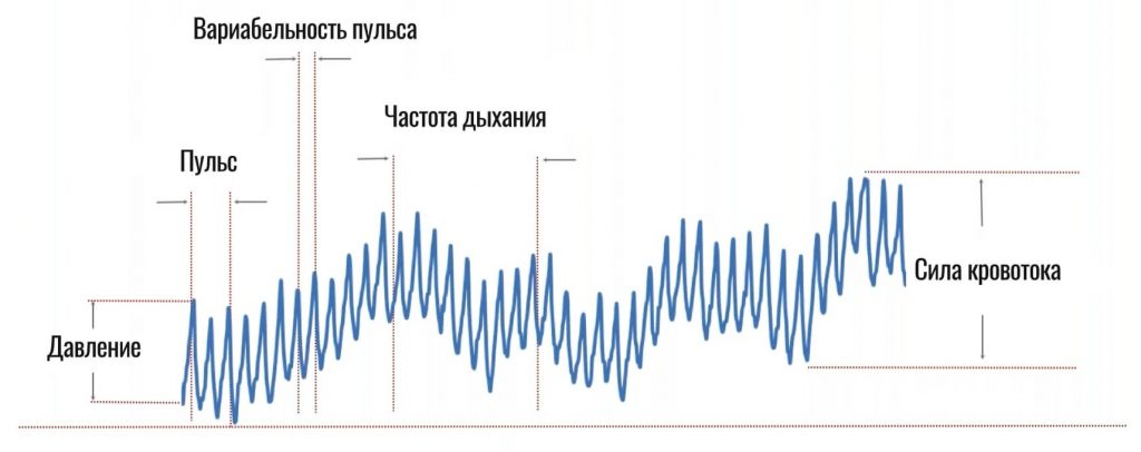 описание пульсовой волны