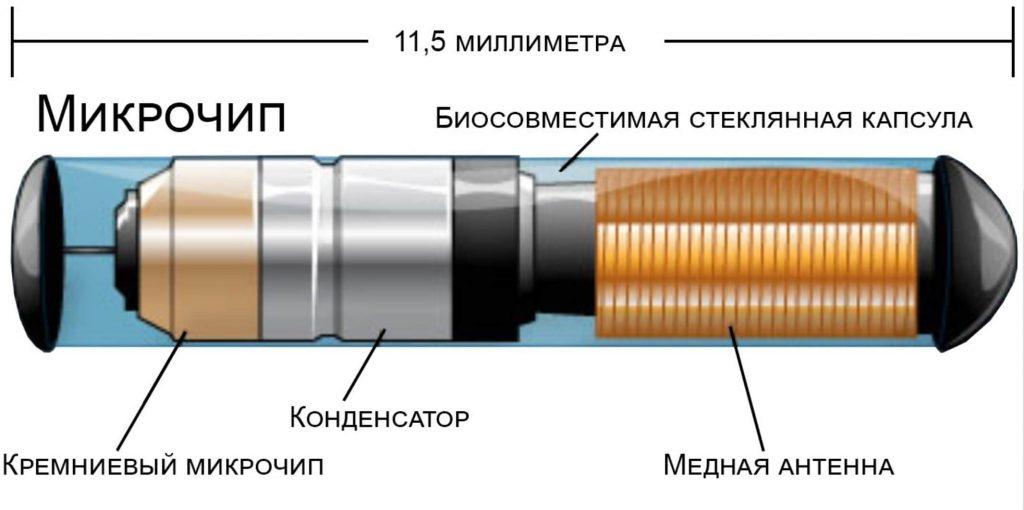 схема микрочипа (капсула RFID), вживляемого в человека