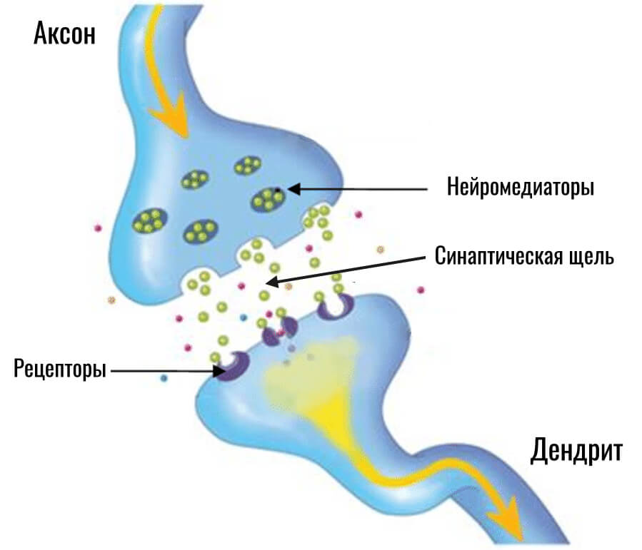 устройство синапса