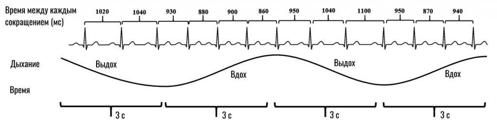влияние дыхания на сердечный ритм