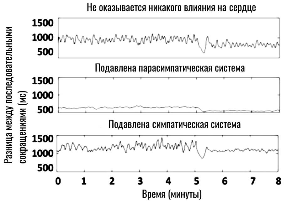 влияние симпатической и парасимпатической систем на сердечный ритм