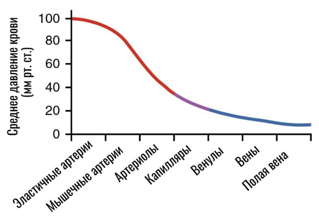 среднее давление крови в сосудах