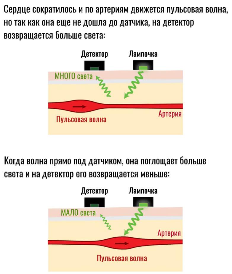 принцип работы оптического пульсометра PPG на фитнес-браслетах
