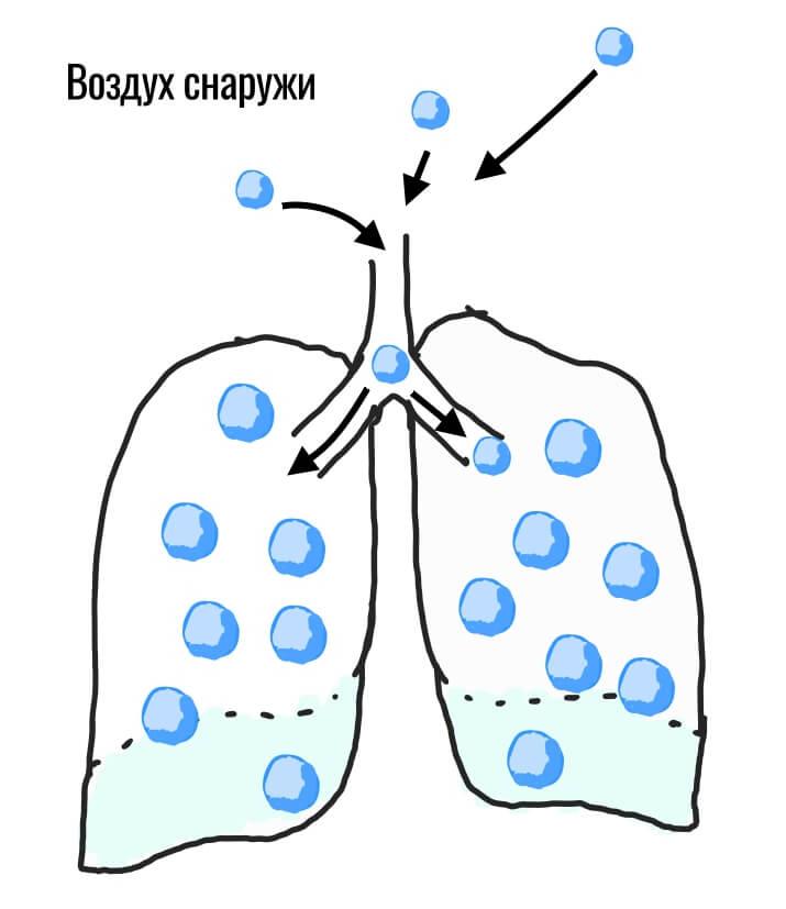 кислород попадает в легкие с воздуха