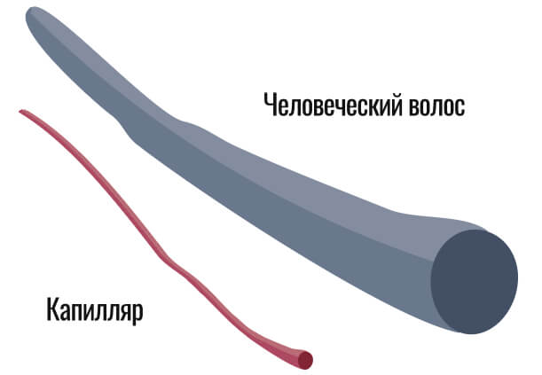 соотношение размера капилляра и волоса