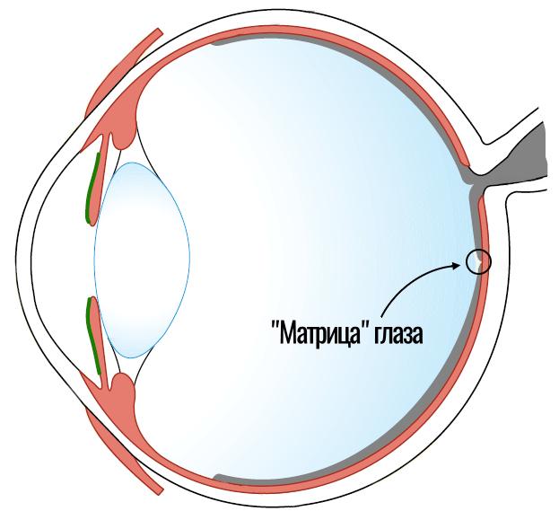 матрица глаза