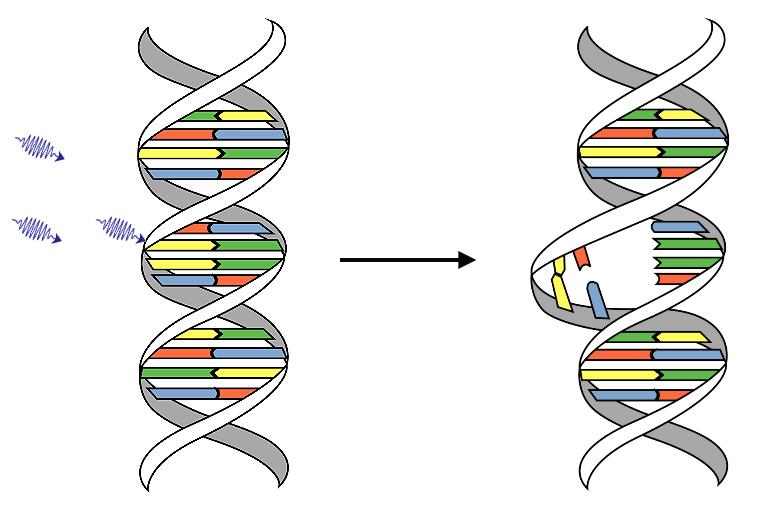 разрушение молекулы ДНК ультрафиолетом
